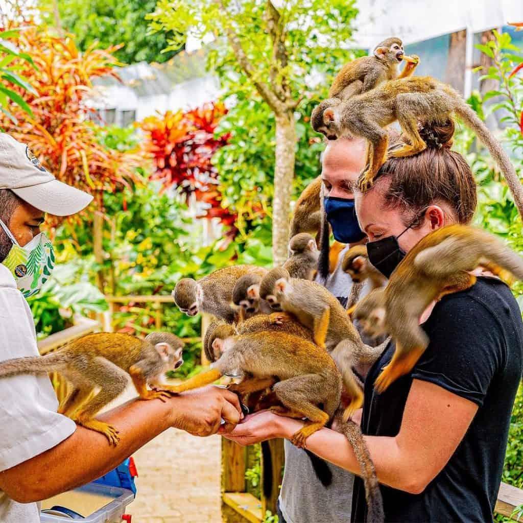 Monkeyland form Punta Cana
