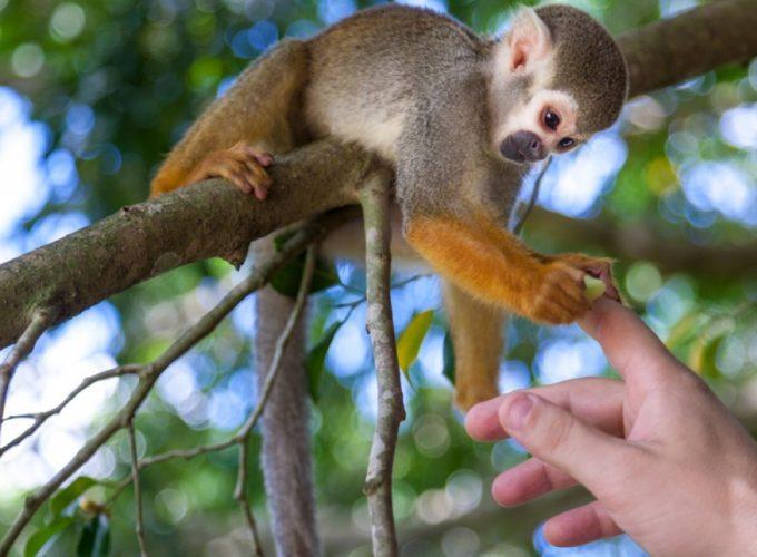 Monkeyland excursion in Punta Cana