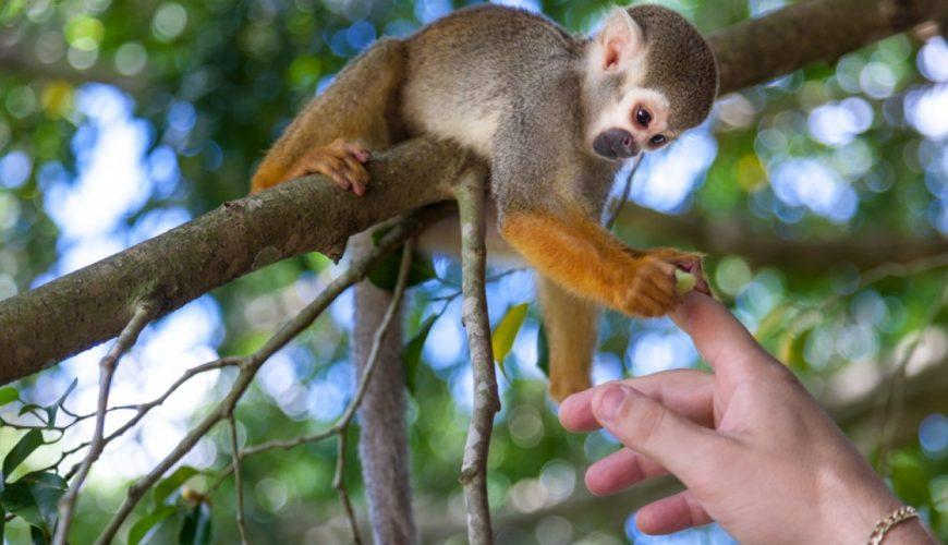 Monkeyland tour Punta Cana