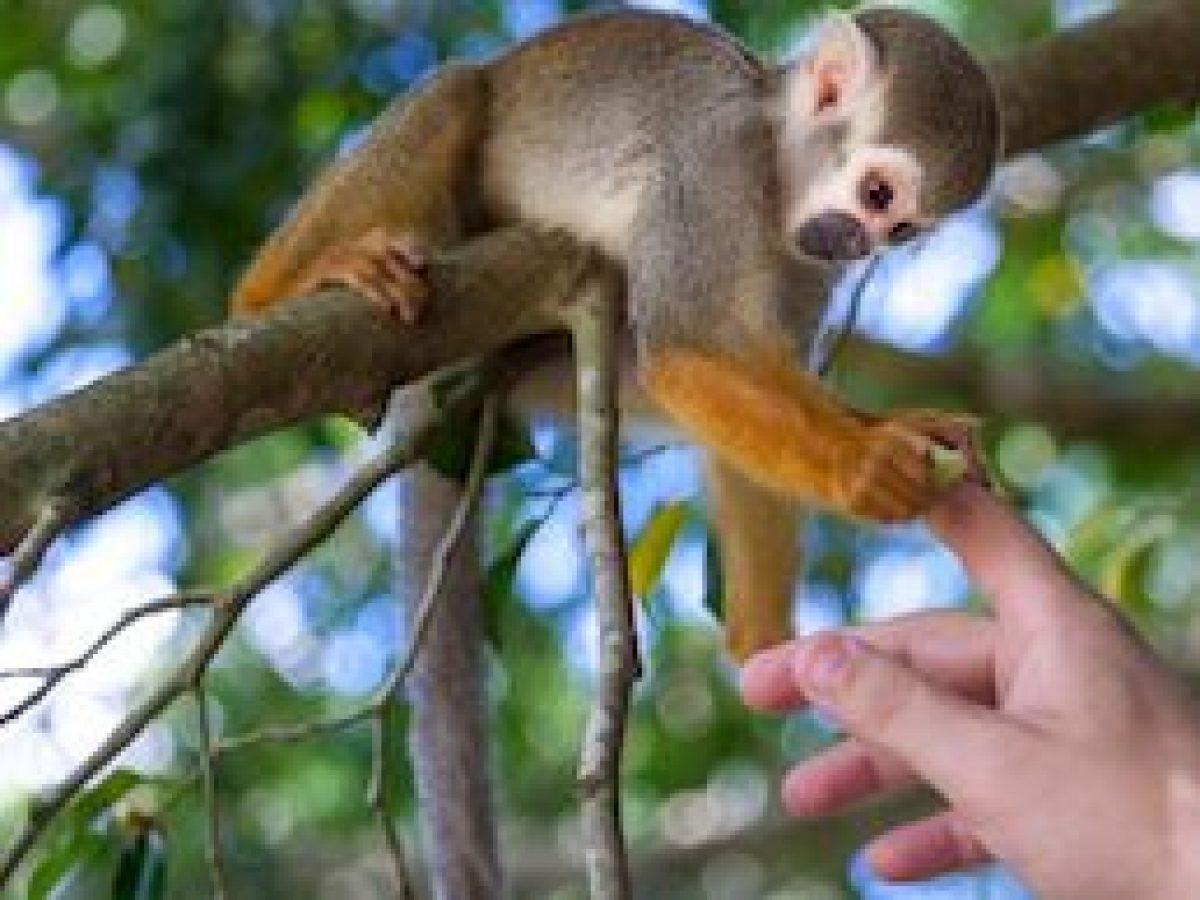Monkeyland from Punta Cana