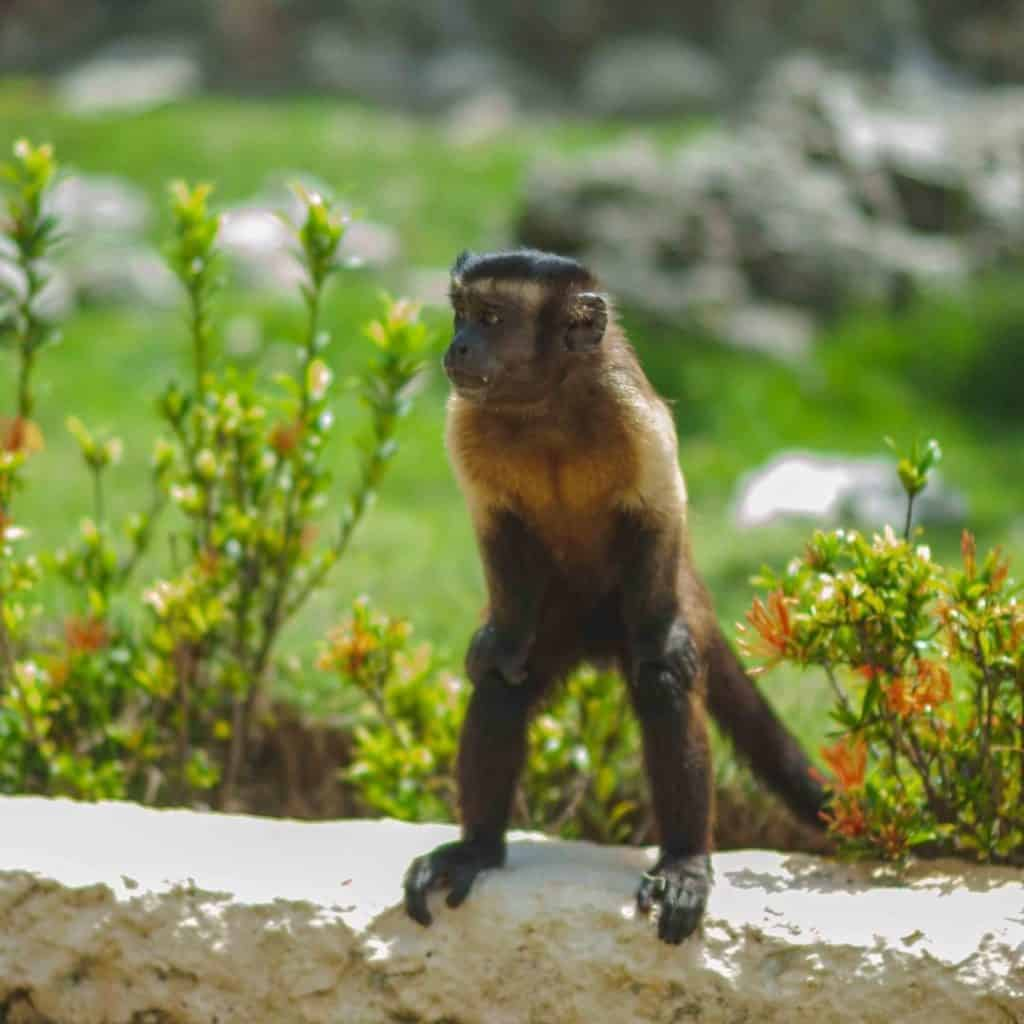 Monkey Island at Scape Park in Punta Cana