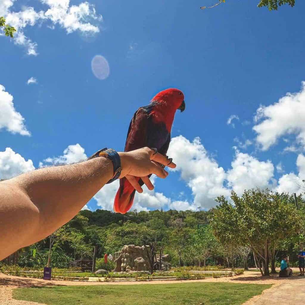 Parrots at Scape Park